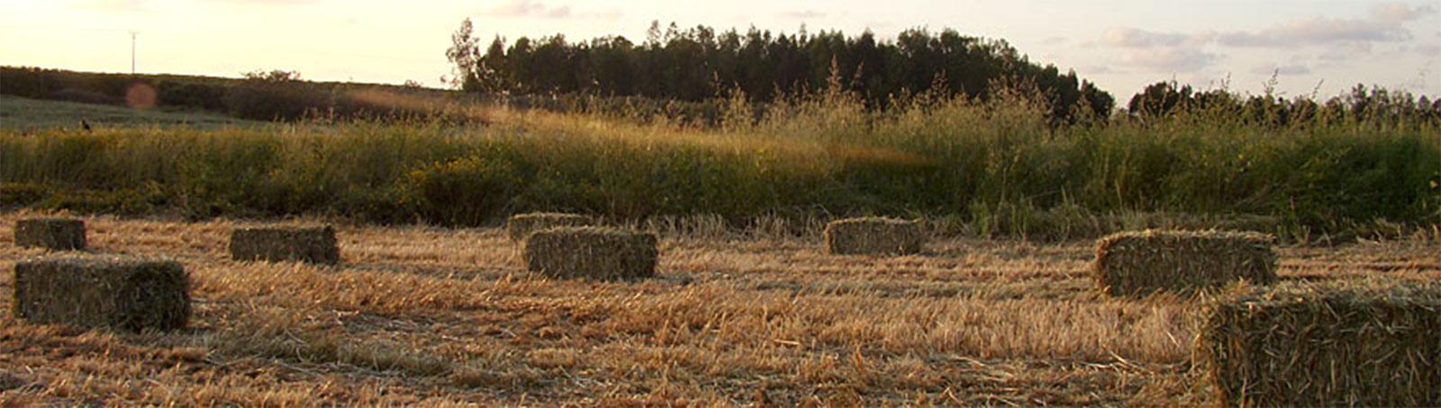 גראסס - משק הרועה - חציר איכותי בחבילות קטנות
